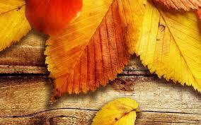 follas-madera